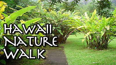 HAWAII NATURE WALK